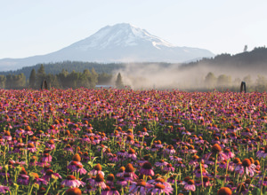 Nutrilite™ Farms: Discover our certified organic farms. Background image shows a certified organic farm field in Trout Lake, Washington.